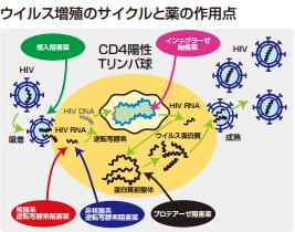 抗HIV.png
